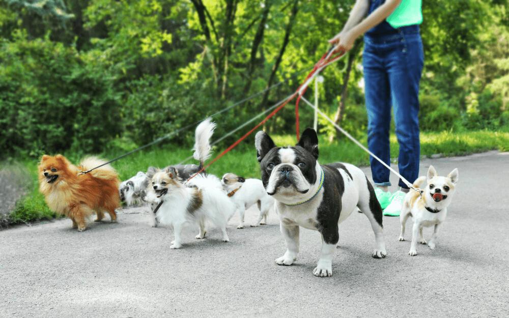 Cuide e passeie com cachorros para ter renda extra